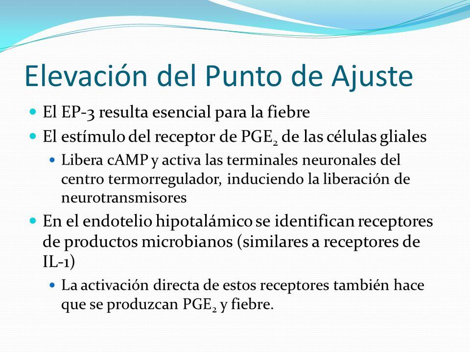 Elevación del Punto de Ajuste El EP-3 resulta esencial para la fiebre El estímulo del receptor de PGE 2 de las células gliales Libera cAMP y activa la