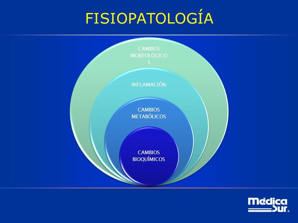 FISIOPATOLOGÍA CAMBIOS MORFOLÓGICO S INFLAMACIÓN CAMBIOS METABÓLICOS CAMBIOS BIOQUÍMICOS