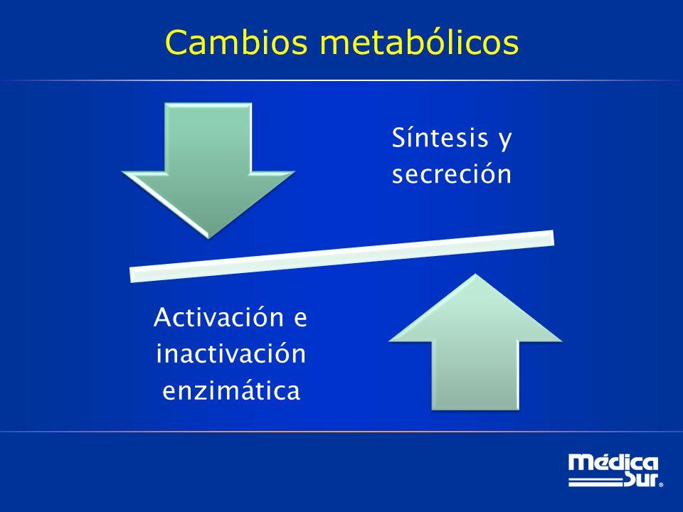 Cambios metabólicos Síntesis y secreción Activación e inactivación enzimática