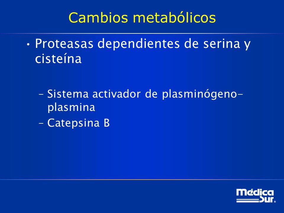 Cambios metabólicos Proteasas dependientes de serina y cisteína –Sistema activador de plasminógeno- plasmina –Catepsina B