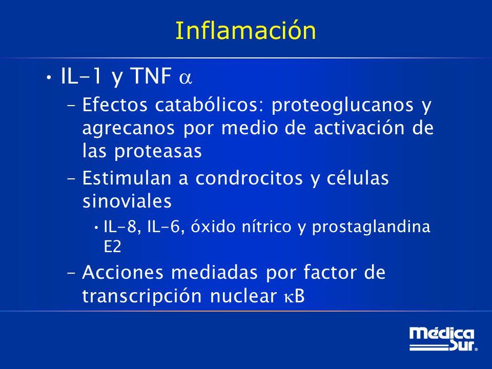 Inflamación IL-1 y TNF –Efectos catabólicos: proteoglucanos y agrecanos por medio de activación de las proteasas –Estimulan a condrocitos y células sinoviales IL-8, IL-6, óxido nítrico y prostaglandina E2 –Acciones mediadas por factor de transcripción nuclear B