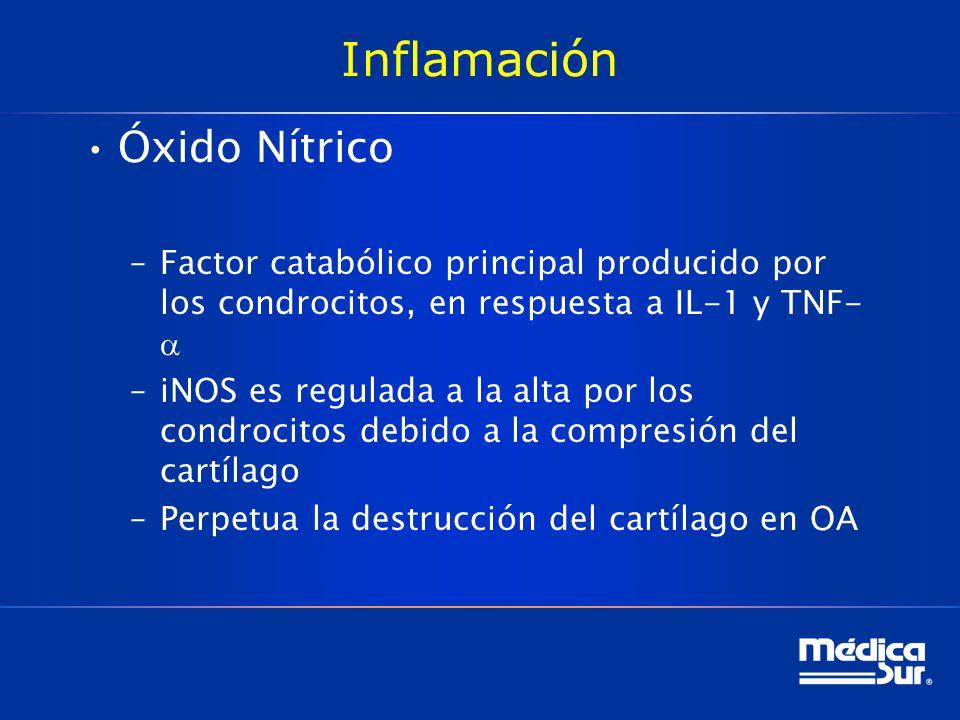 Inflamación Óxido Nítrico –Factor catabólico principal producido por los condrocitos, en respuesta a IL-1 y TNF- –iNOS es regulada a la alta por los condrocitos debido a la compresión del cartílago –Perpetua la destrucción del cartílago en OA
