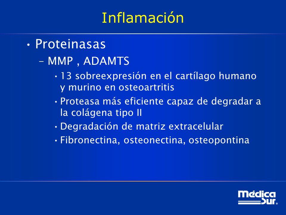 Inflamación Proteinasas –MMP, ADAMTS 13 sobreexpresión en el cartílago humano y murino en osteoartritis Proteasa más eficiente capaz de degradar a la colágena tipo II Degradación de matriz extracelular Fibronectina, osteonectina, osteopontina