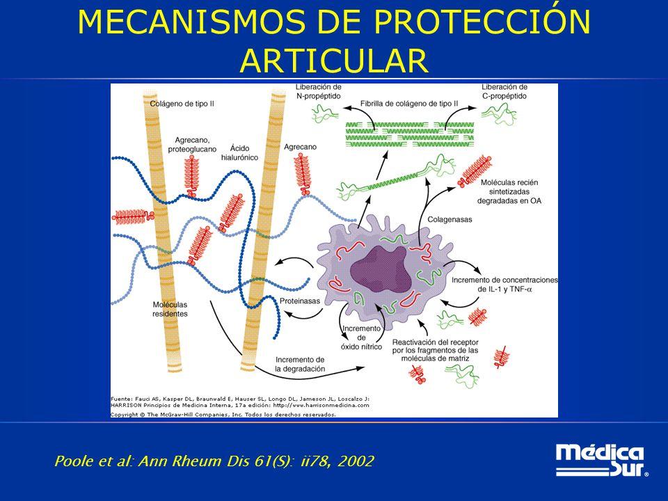 MECANISMOS DE PROTECCIÓN ARTICULAR Poole et al: Ann Rheum Dis 61(S): ii78, 2002