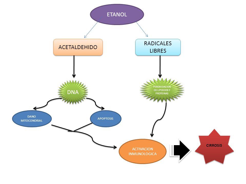NAFLD Hepatopatia mas comun en occidente acidos grasos libres Activacion de NFkB inflamacion Cirrosis CHH