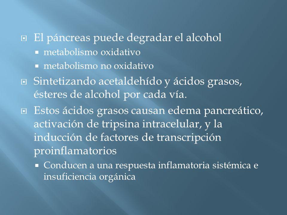 El páncreas puede degradar el alcohol metabolismo oxidativo metabolismo no oxidativo Sintetizando acetaldehído y ácidos grasos, ésteres de alcohol por cada vía.