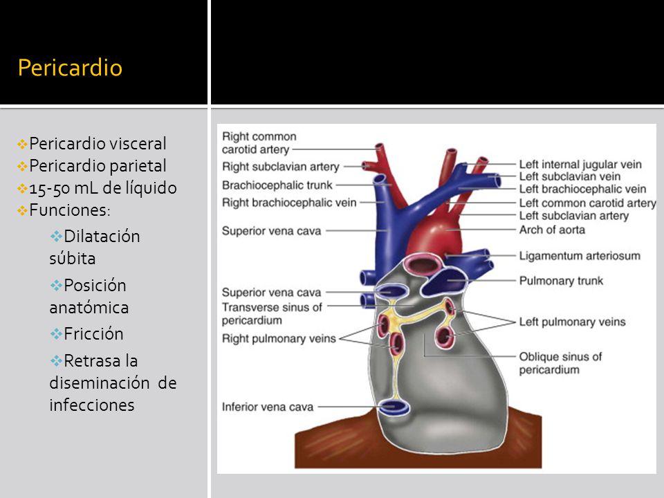 Pericardio Pericardio visceral Pericardio parietal 15-50 mL de líquido Funciones: Dilatación súbita Posición anatómica Fricción Retrasa la diseminació