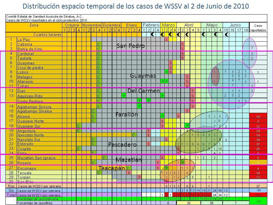 Distribución espacio temporal de los casos de WSSV al 2 de Junio de 2010 9 183 156 1 2 4 5 4 3 1 5 2 5 7 1 2 1 1 2 1 1 7 3 2 1 3 Guaymas Del Carmen Fa