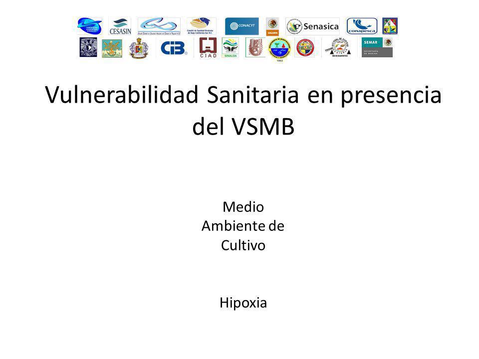 Medio Ambiente de Cultivo Hipoxia Vulnerabilidad Sanitaria en presencia del VSMB