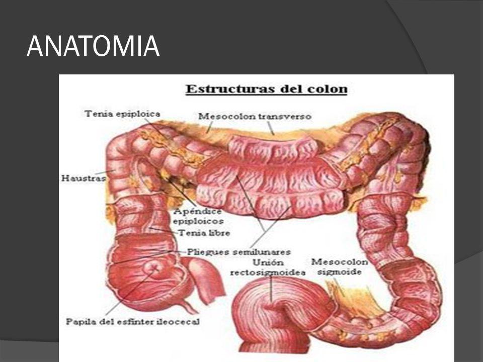 FACTORES DE RIESGO Factores poco claros Enfermedad coronaria Tabaquismo (> en recto) Anastomosis uretero-cólica Acromegalia Consumo de carne roja Café / té Mutaciones de BRCA (1) RT Esófago de Barrett VIH Linfoma de Hodgkin
