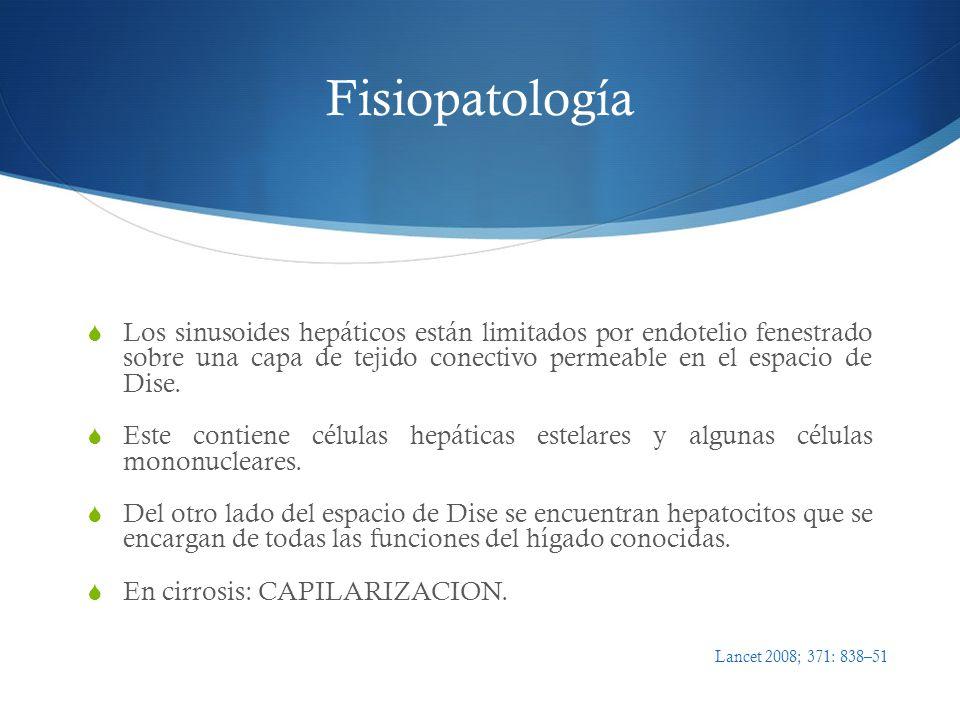 Fisiopatología Los sinusoides hepáticos están limitados por endotelio fenestrado sobre una capa de tejido conectivo permeable en el espacio de Dise. E