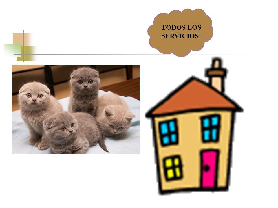 TODOS LOS SERVICIOS