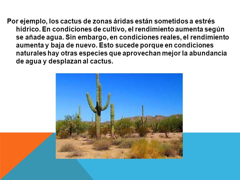 Por ejemplo, los cactus de zonas áridas están sometidos a estrés hídrico. En condiciones de cultivo, el rendimiento aumenta según se añade agua. Sin e