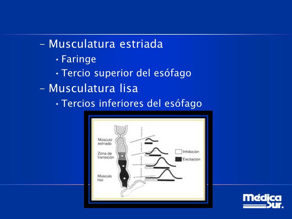 –Musculatura estriada Faringe Tercio superior del esófago –Musculatura lisa Tercios inferiores del esófago