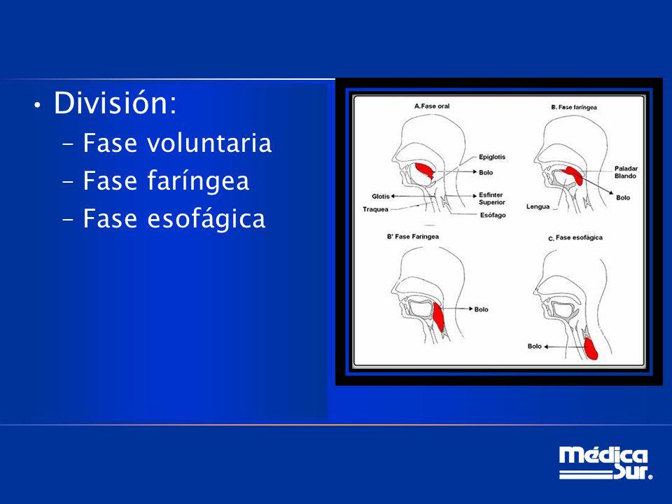 División: –Fase voluntaria –Fase faríngea –Fase esofágica