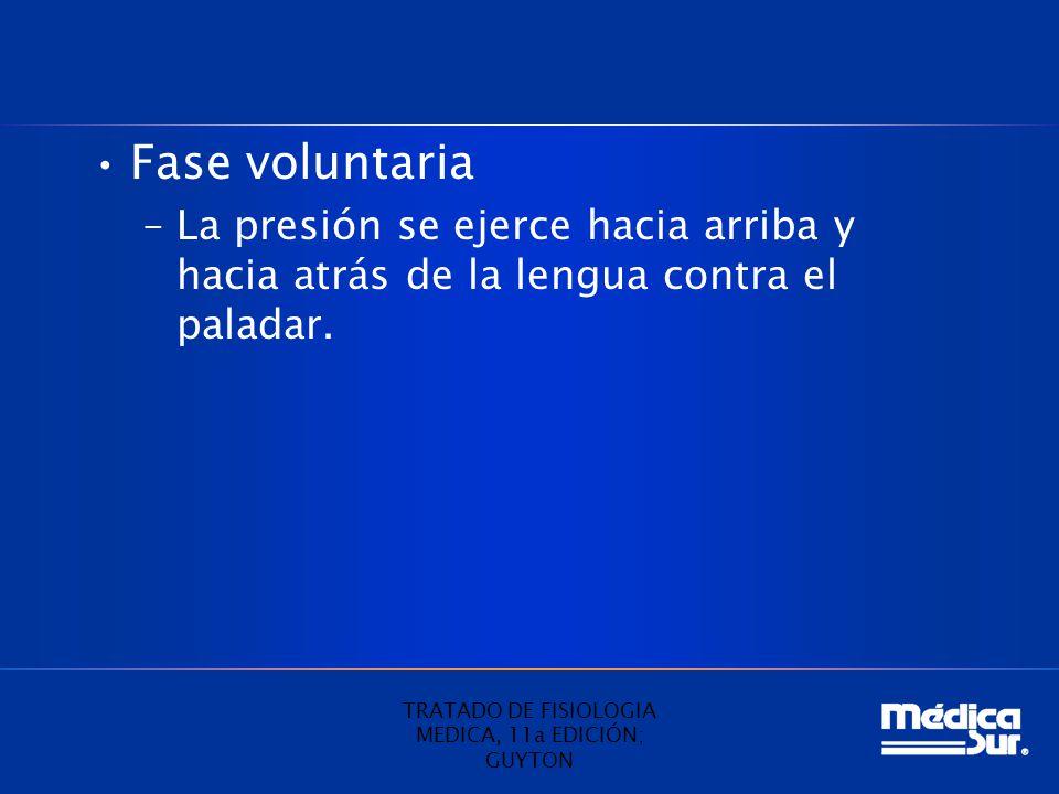 Fase voluntaria –La presión se ejerce hacia arriba y hacia atrás de la lengua contra el paladar. TRATADO DE FISIOLOGIA MEDICA, 11a EDICIÓN; GUYTON