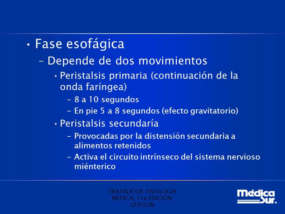 Fase esofágica –Depende de dos movimientos Peristalsis primaria (continuación de la onda faríngea) –8 a 10 segundos –En pie 5 a 8 segundos (efecto gravitatorio) Peristalsis secundaría –Provocadas por la distensión secundaria a alimentos retenidos –Activa el circuito intrínseco del sistema nervioso miénterico TRATADO DE FISIOLOGIA MEDICA, 11a EDICIÓN; GUYTON