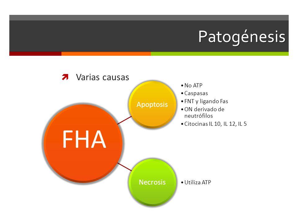 Patogénesis Varias causas Apoptosis No ATP Caspasas FNT y ligando Fas ON derivado de neutrófilos Citocinas IL 10, IL 12, IL 5 Necrosis Utiliza ATP FHA