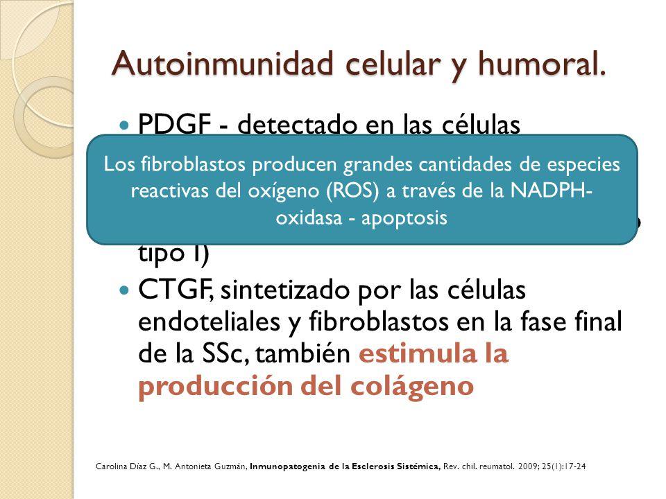 Autoinmunidad celular y humoral. PDGF - detectado en las células endoteliales y macrófagos perivasculares, estimula la proliferación fibrocelular – Pr