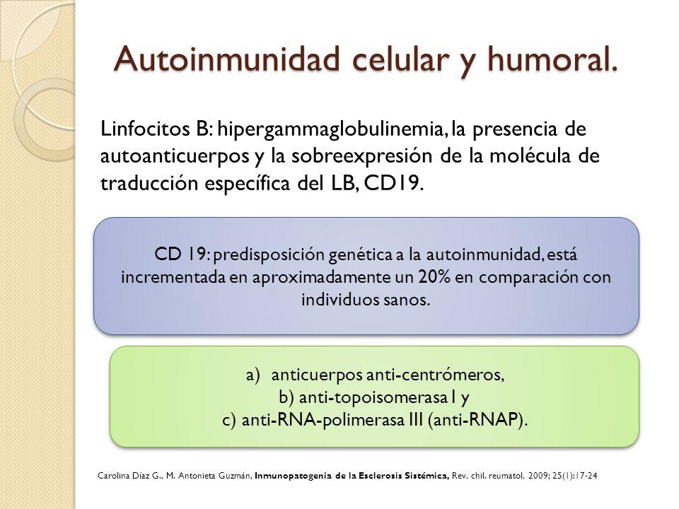 Autoinmunidad celular y humoral. Linfocitos B: hipergammaglobulinemia, la presencia de autoanticuerpos y la sobreexpresión de la molécula de traducció