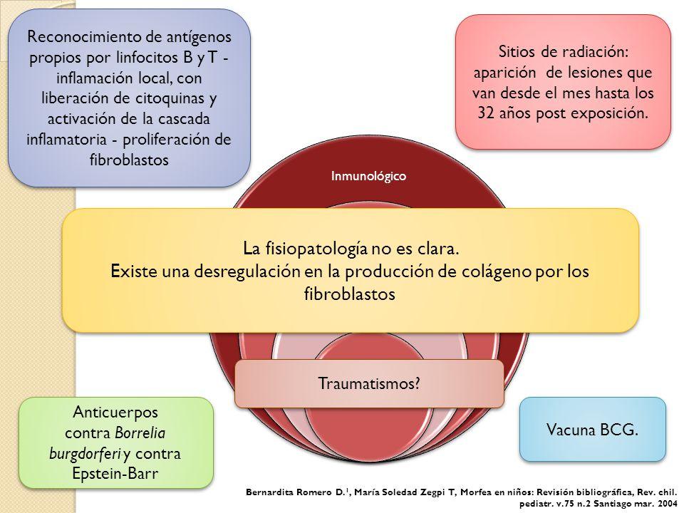 Histología Fase Tardía 4 Disminución del número y tamaño de los anexos cutáneos.