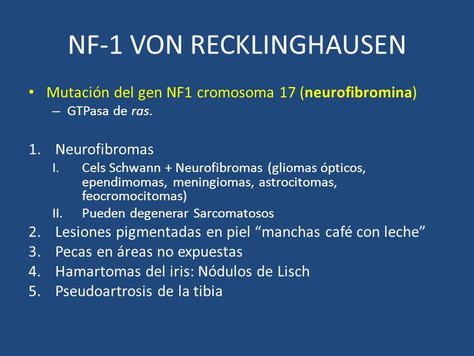 NF-1 VON RECKLINGHAUSEN Mutación del gen NF1 cromosoma 17 (neurofibromina) – GTPasa de ras. 1.Neurofibromas I.Cels Schwann + Neurofibromas (gliomas óp