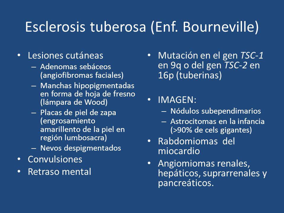 Esclerosis tuberosa (Enf. Bourneville) Lesiones cutáneas – Adenomas sebáceos (angiofibromas faciales) – Manchas hipopigmentadas en forma de hoja de fr