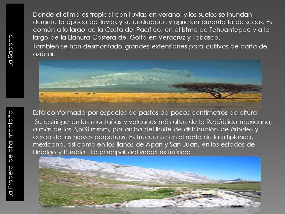 La Sabana La Pradera de alta montaña Donde el clima es tropical con lluvias en verano, y los suelos se inundan durante la época de lluvias y se endure
