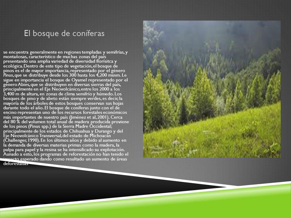El bosque de coníferas se encuentra generalmente en regiones templadas y semifrías, y montañosas, característico de muchas zonas del país presentando