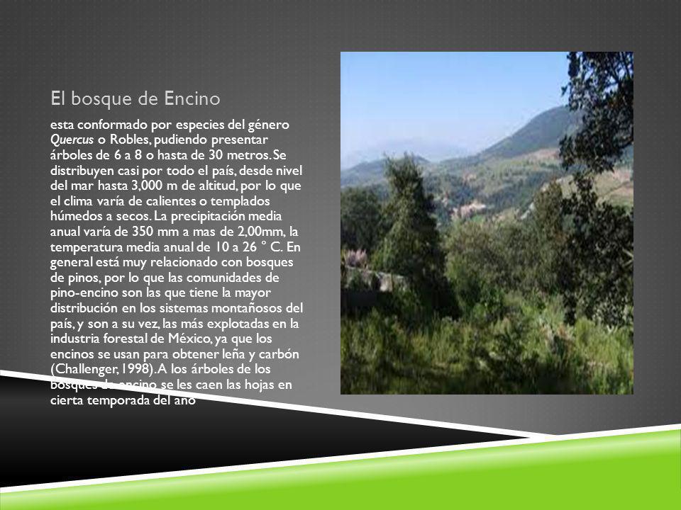 El bosque de Encino esta conformado por especies del género Quercus o Robles, pudiendo presentar árboles de 6 a 8 o hasta de 30 metros. Se distribuyen