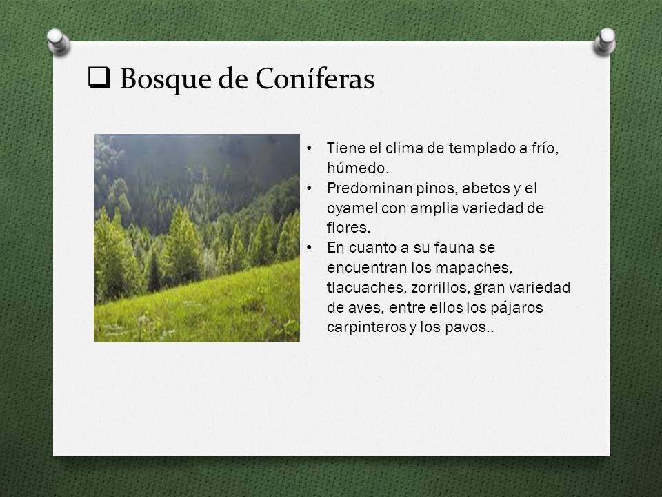 El Pastizal Este tipo de vegetación se encuentra dominada por las gramíneas o pastos. Los arbustos y árboles son escasos, están dispersos y sólo se co