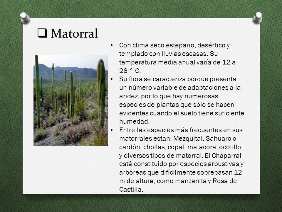 Bosque de Encino Presenta una temperatura de 10° a 26°, lo que encontramos en muchas regiones del país. El encino y encino-roble que la componen puede