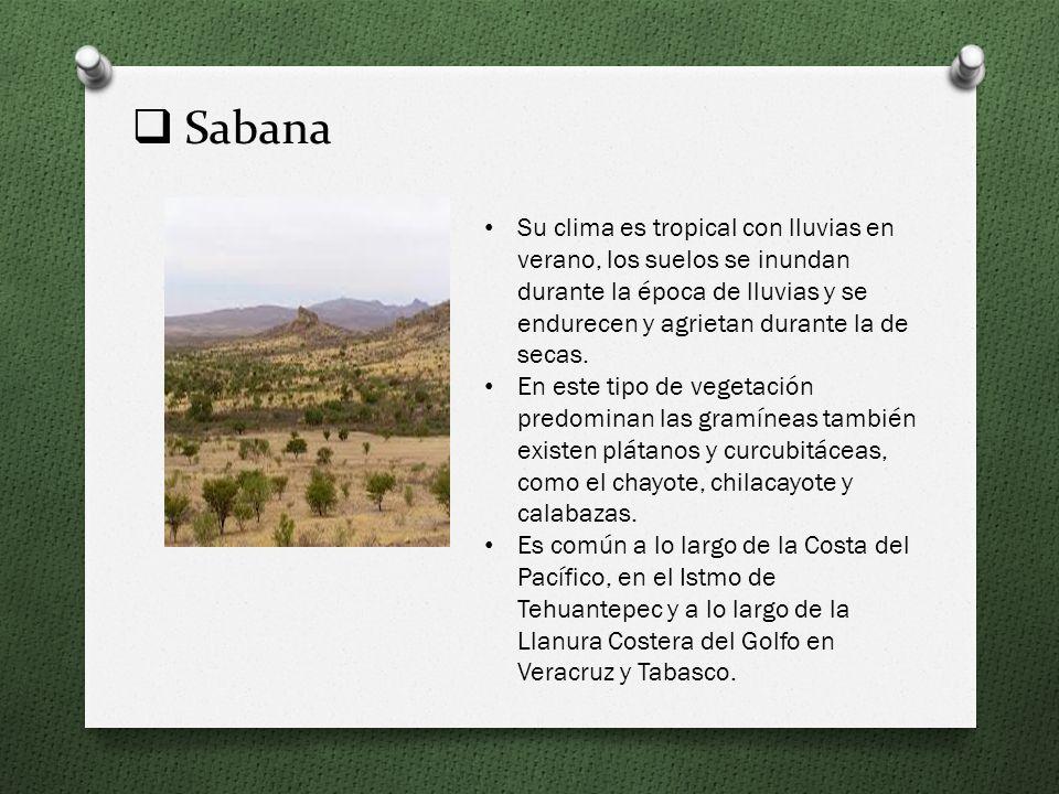 Matorral Con clima seco estepario, desértico y templado con lluvias escasas. Su temperatura media anual varía de 12 a 26 ° C. Su flora se caracteriza