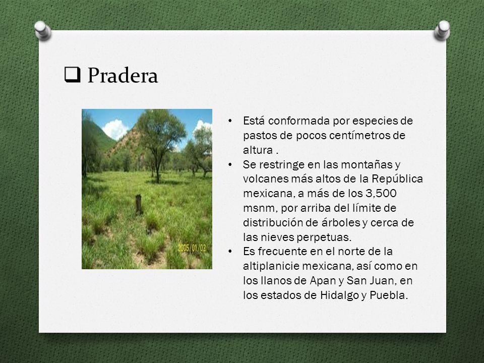 Sabana Su clima es tropical con lluvias en verano, los suelos se inundan durante la época de lluvias y se endurecen y agrietan durante la de secas. En
