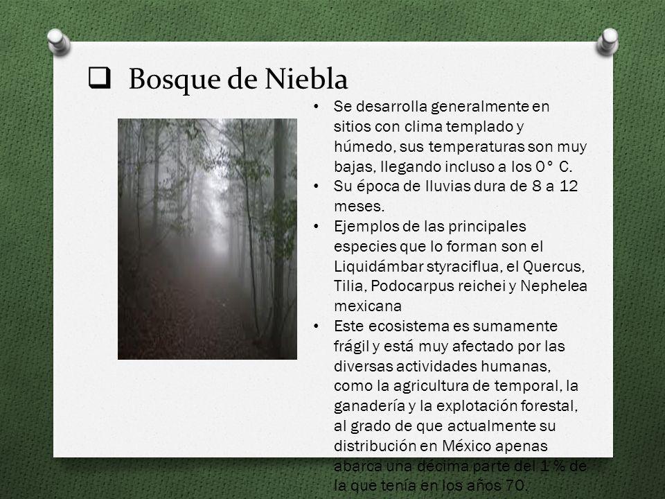 Pradera Está conformada por especies de pastos de pocos centímetros de altura. Se restringe en las montañas y volcanes más altos de la República mexic