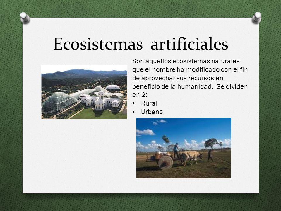Bosque de Niebla Se desarrolla generalmente en sitios con clima templado y húmedo, sus temperaturas son muy bajas, llegando incluso a los 0° C. Su épo