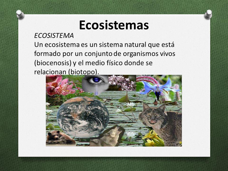 ECOSISTEMA Un ecosistema es un sistema natural que está formado por un conjunto de organismos vivos (biocenosis) y el medio físico donde se relacionan (biotopo).