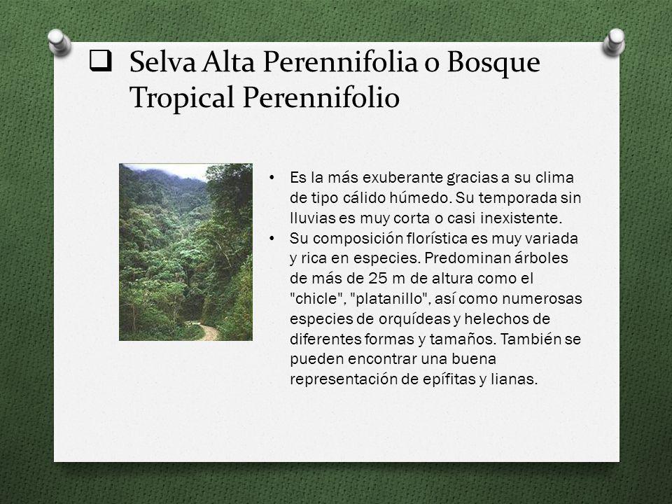 Selva Alta Perennifolia o Bosque Tropical Perennifolio Es la más exuberante gracias a su clima de tipo cálido húmedo.