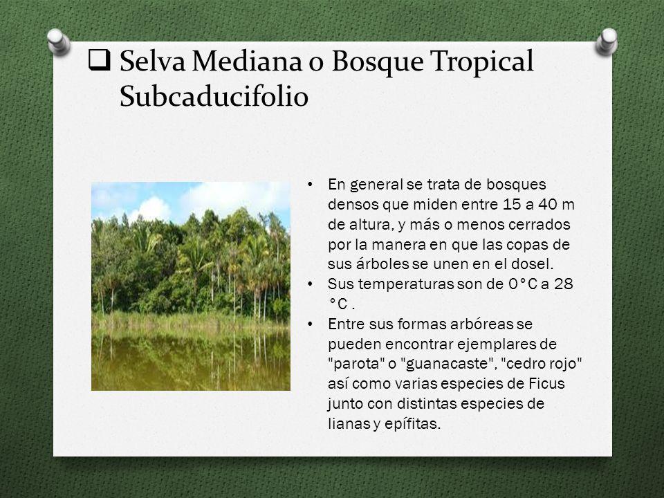 Selva Mediana o Bosque Tropical Subcaducifolio En general se trata de bosques densos que miden entre 15 a 40 m de altura, y más o menos cerrados por la manera en que las copas de sus árboles se unen en el dosel.