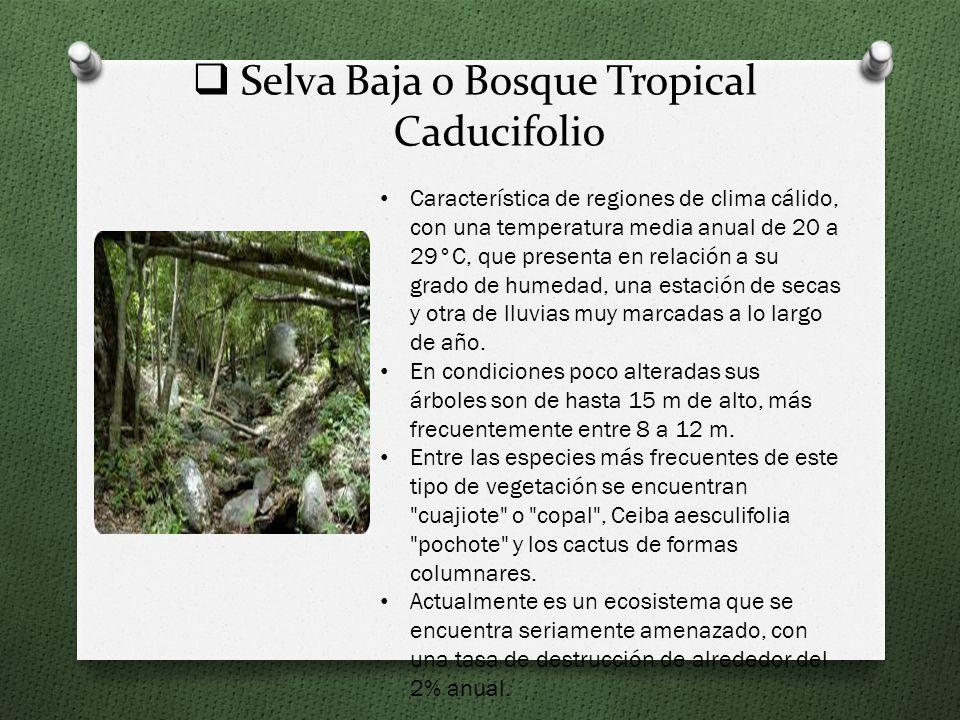 Selva Baja o Bosque Tropical Caducifolio Característica de regiones de clima cálido, con una temperatura media anual de 20 a 29°C, que presenta en relación a su grado de humedad, una estación de secas y otra de lluvias muy marcadas a lo largo de año.