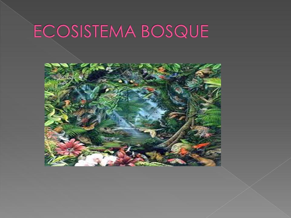 Los ecosistemas arbolados o bosques conforman la mayor masa de biósfera terrestre.