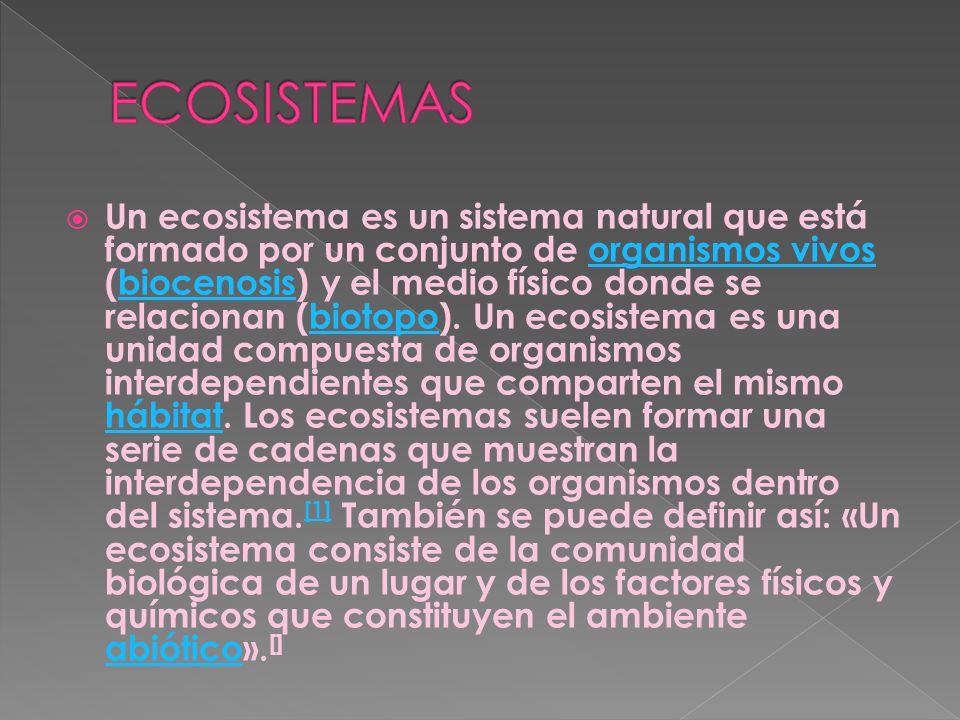 ALEJANDRA FARFAN CONTADOR LIDYA EUNICE ESPINOSA TORRES ESCUELA : IGNACIO QUIROZ GUTIERREZ 5:B
