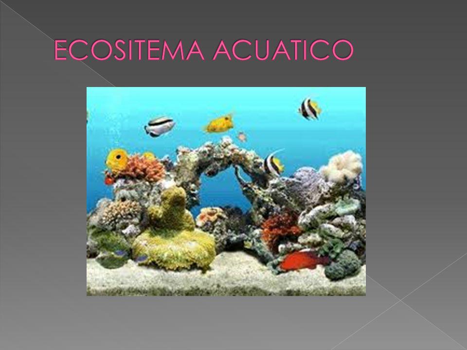 Los ecosistemas acuáticos incluyen las aguas de los océanos y las aguas continentales dulces o saladas.