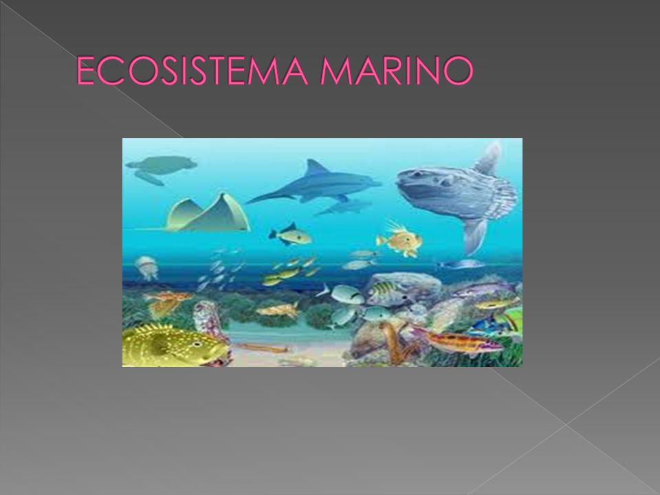 La oceanografía se ocupa del estudio de estos ecosistemas.