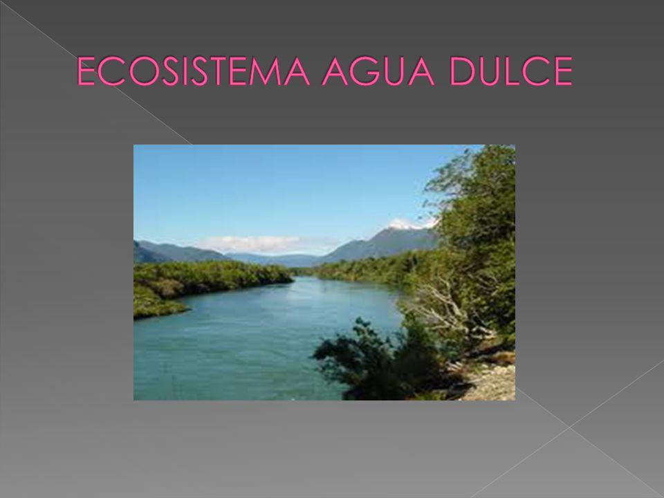 La limnologia se ocupa del estudio de los ecosistemas de ríos y lagos.