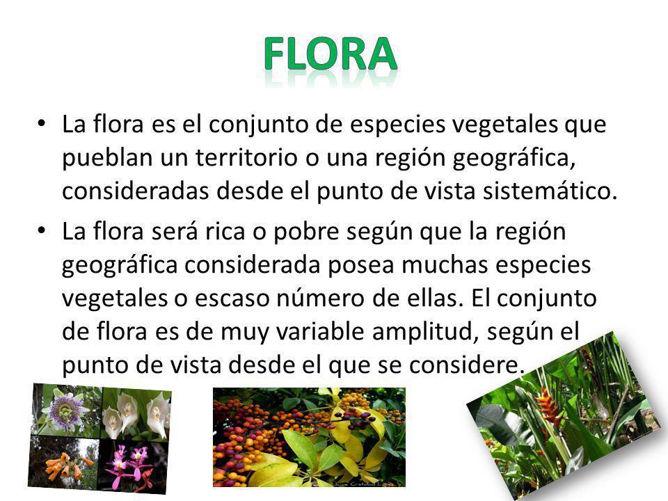 La flora es el conjunto de especies vegetales que pueblan un territorio o una región geográfica, consideradas desde el punto de vista sistemático. La