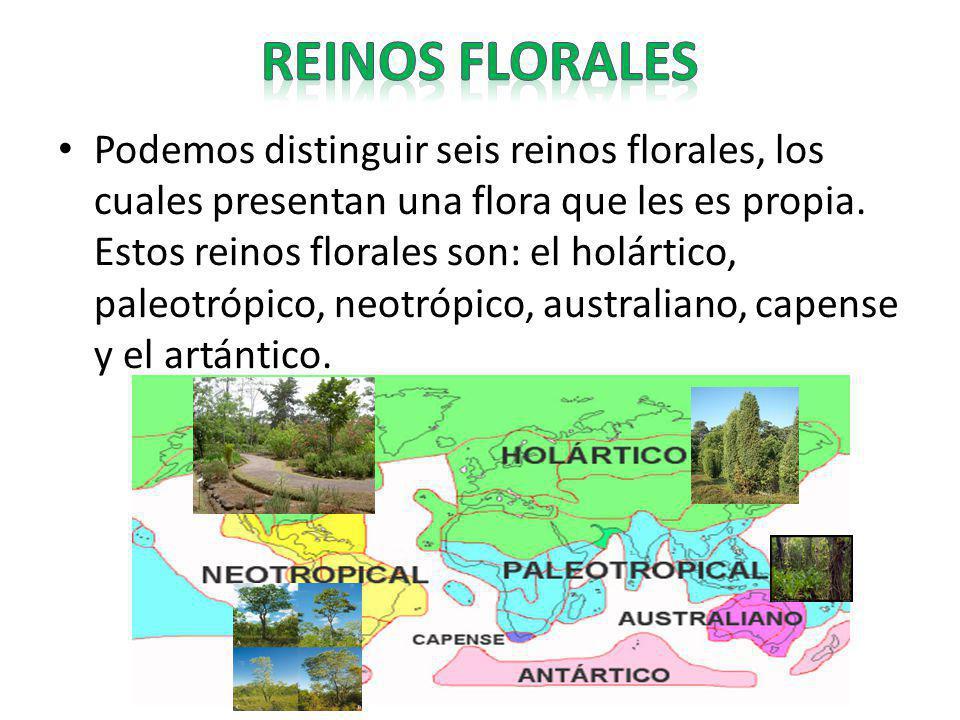 Podemos distinguir seis reinos florales, los cuales presentan una flora que les es propia. Estos reinos florales son: el holártico, paleotrópico, neot