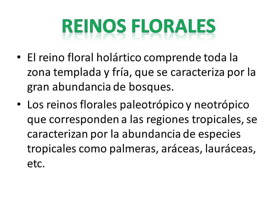 El reino floral holártico comprende toda la zona templada y fría, que se caracteriza por la gran abundancia de bosques. Los reinos florales paleotrópi