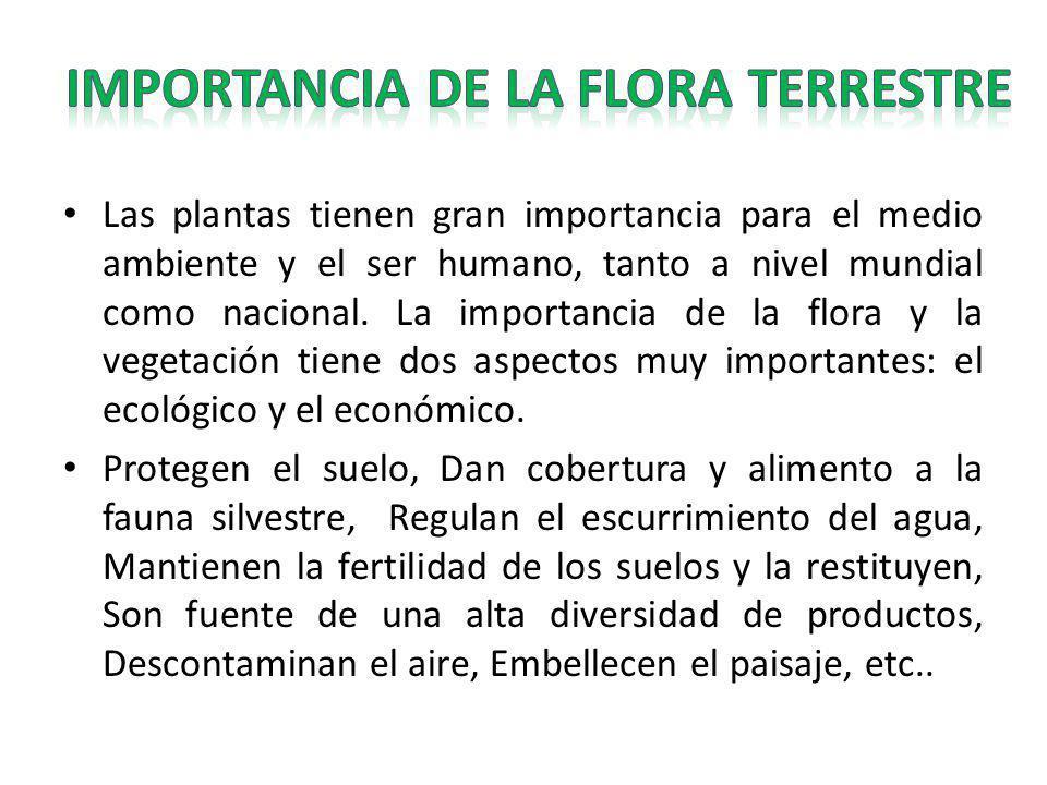 Las plantas tienen gran importancia para el medio ambiente y el ser humano, tanto a nivel mundial como nacional. La importancia de la flora y la veget