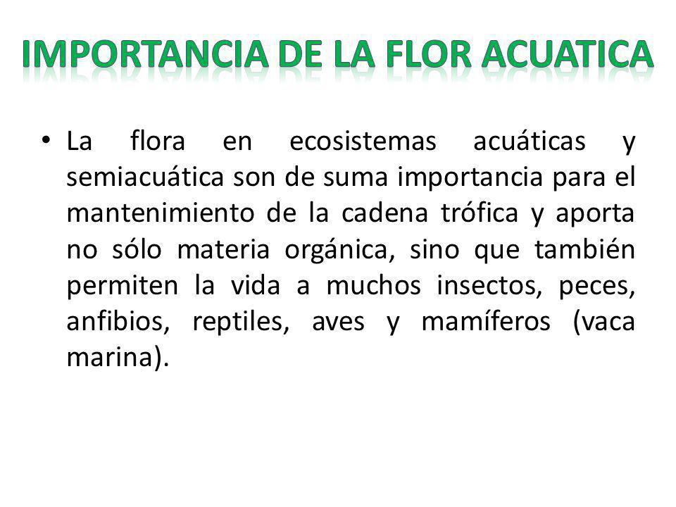 La flora en ecosistemas acuáticas y semiacuática son de suma importancia para el mantenimiento de la cadena trófica y aporta no sólo materia orgánica,